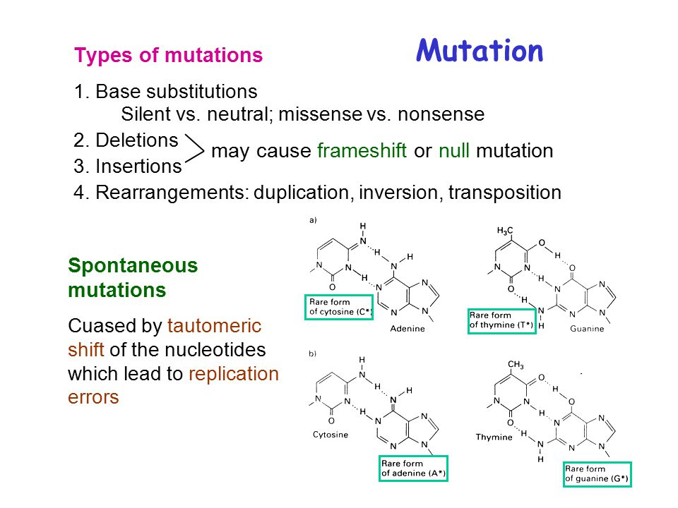 Mutation Types of mutations 1. Base substitutions Silent vs.