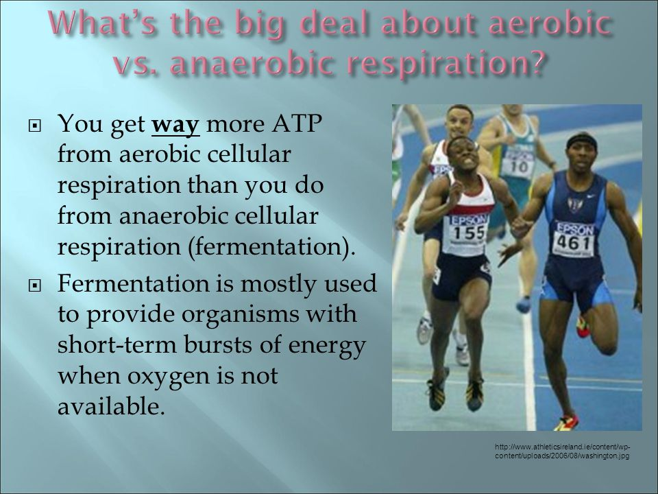  You get way more ATP from aerobic cellular respiration than you do from anaerobic cellular respiration (fermentation).  Fermentation is mostly used