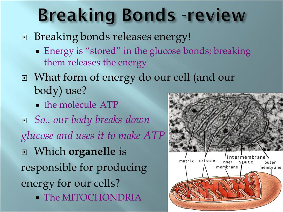" Breaking bonds releases energy!  Energy is ""stored"" in the glucose bonds; breaking them releases the energy  What form of energy do our cell (and"