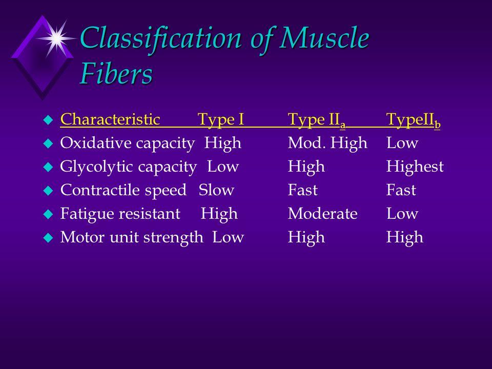 Classification of Muscle Fibers u Characteristic Type IType II a TypeII b u Oxidative capacity HighMod.