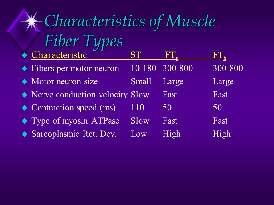 Characteristics of Muscle Fiber Types  CharacteristicST FT a FT b u Fibers per motor neuron10-180 300-800300-800 u Motor neuron sizeSmall LargeLarge u Nerve conduction velocitySlow FastFast u Contraction speed (ms)110 5050 u Type of myosin ATPaseSlow FastFast u Sarcoplasmic Ret.