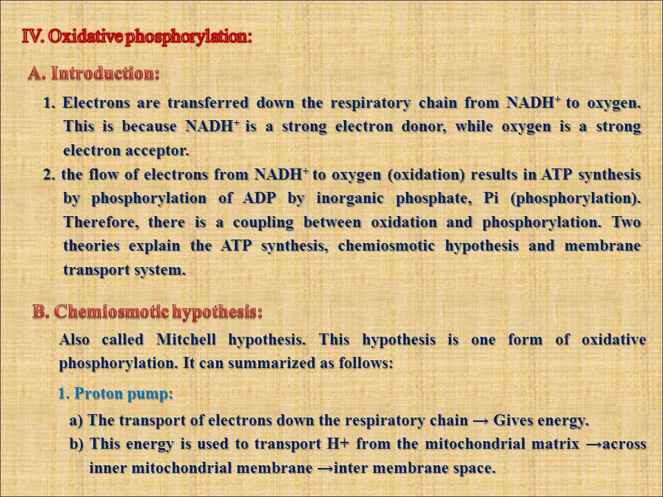 1. Electrons are transferred down the respiratory chain from NADH + to oxygen.