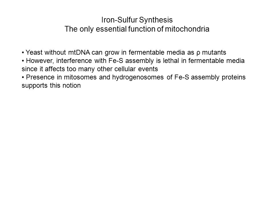Iron-Sulfur Synthesis The only essential function of mitochondria Yeast without mtDNA can grow in fermentable media as ρ mutants However, interference with Fe-S assembly is lethal in fermentable media since it affects too many other cellular events Presence in mitosomes and hydrogenosomes of Fe-S assembly proteins supports this notion