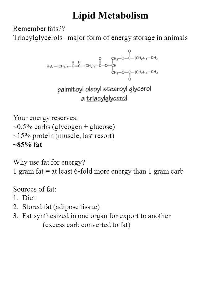 Lipid Metabolism Remember fats .