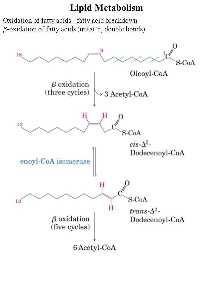 Lipid Metabolism Oxidation of fatty acids - fatty acid breakdown  -oxidation of fatty acids (unsat'd, double bonds)