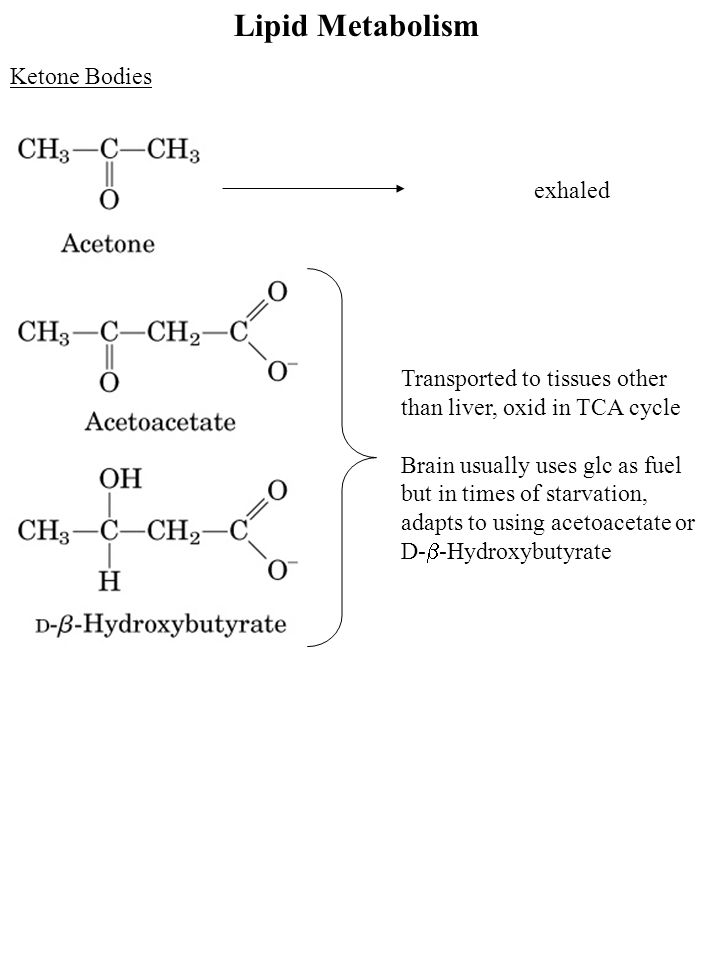 Lipid Metabolism Ketone Bodies exhaled Transported to tissues other than liver, oxid in TCA cycle Brain usually uses glc as fuel but in times of starvation, adapts to using acetoacetate or D-  -Hydroxybutyrate