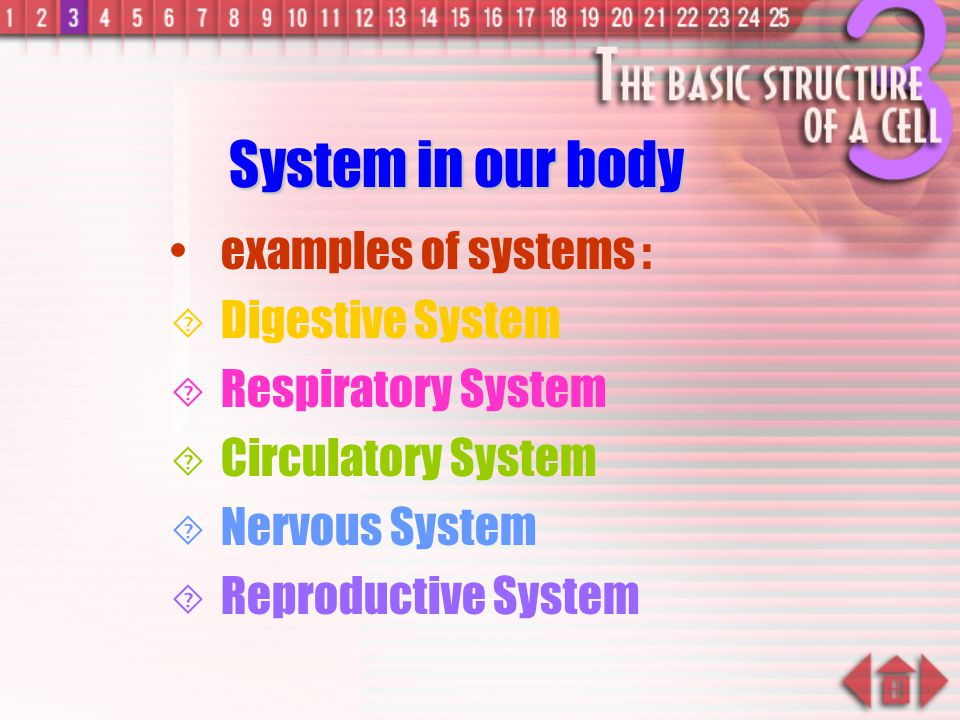 System Several organs and tissues work together to carry out a particular set of functions in a co-ordinated way –Human : digestive, respiratory, excretory, circulatory and reproductive systems –Plant : root and shoot systems