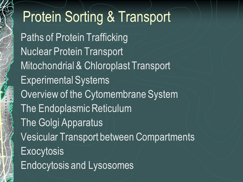 Protein Sorting & Transport Paths of Protein Trafficking Nuclear Protein Transport Mitochondrial & Chloroplast Transport Experimental Systems Overview