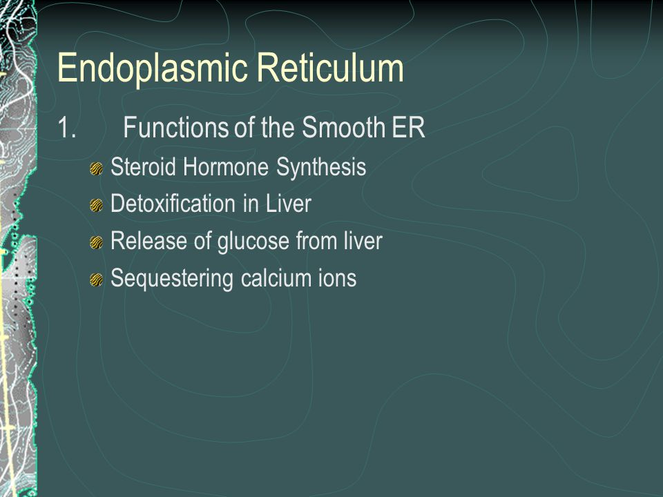 Endoplasmic Reticulum 1.Functions of the Smooth ER Steroid Hormone Synthesis Detoxification in Liver Release of glucose from liver Sequestering calciu