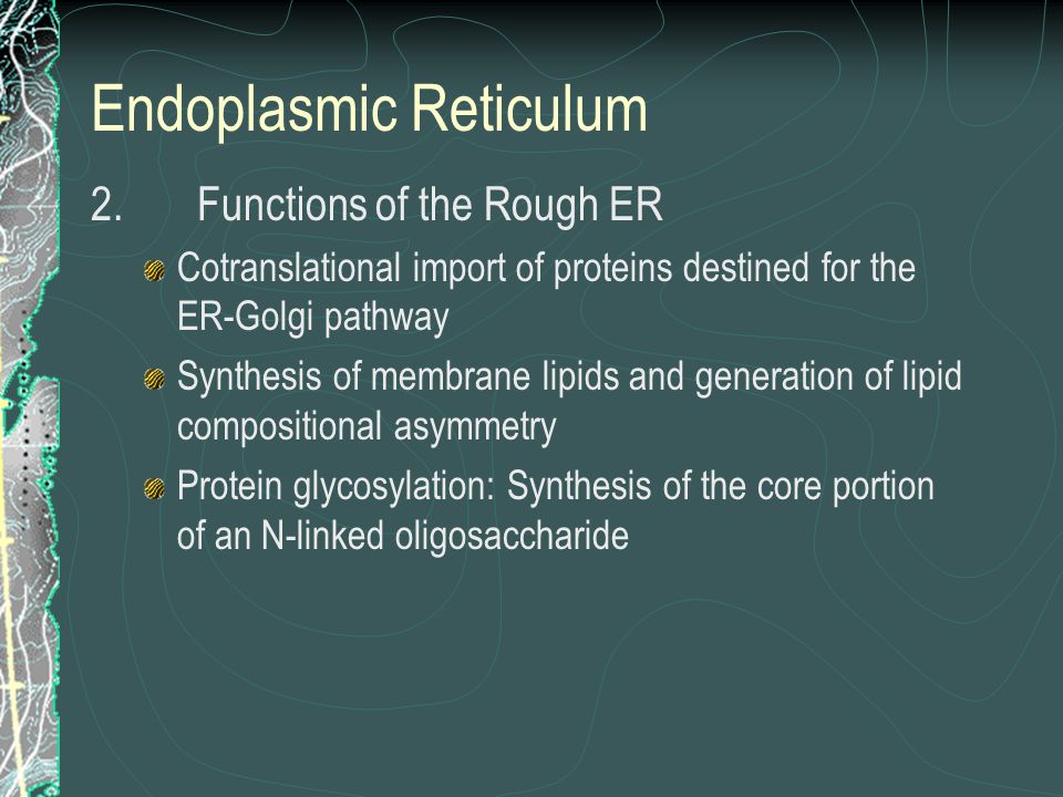 Endoplasmic Reticulum 2.Functions of the Rough ER Cotranslational import of proteins destined for the ER-Golgi pathway Synthesis of membrane lipids and generation of lipid compositional asymmetry Protein glycosylation: Synthesis of the core portion of an N-linked oligosaccharide