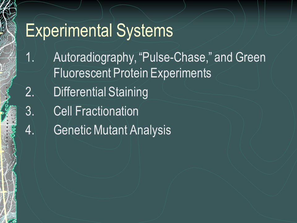 """Experimental Systems 1.Autoradiography, """"Pulse-Chase,"""" and Green Fluorescent Protein Experiments 2.Differential Staining 3.Cell Fractionation 4.Geneti"""