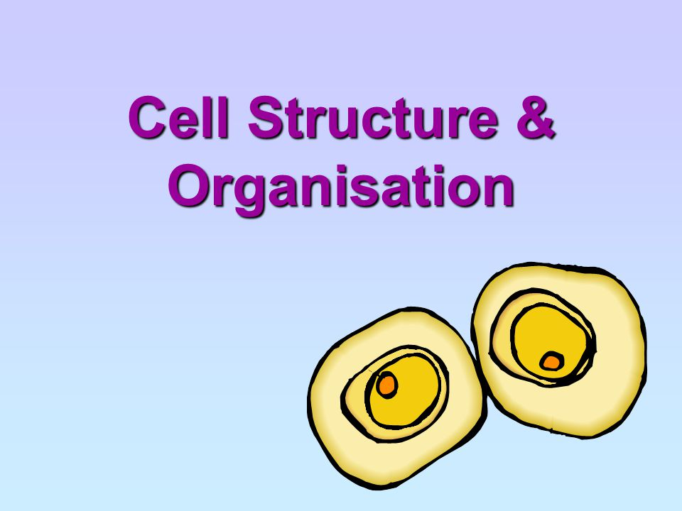 Chapter Outline (a) identify cell structures (including organelles) of typical plant and animal cells from diagrams, photomicrographs and as seen under the light microscope using prepared slides and fresh material treated with an appropriate temporary staining technique: chloroplasts cell membrane cell wall cytoplasm cell vacuoles nucleus