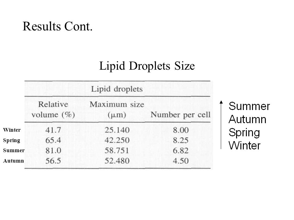 Results Cont. Lipid Droplets Size Winter Spring Summer Autumn