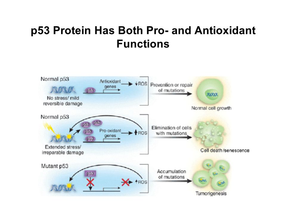 p53 Protein Has Both Pro- and Antioxidant Functions