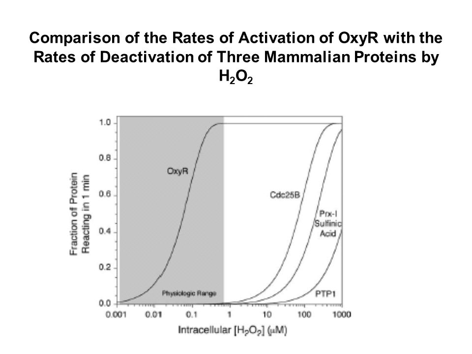 Comparison of the Rates of Activation of OxyR with the Rates of Deactivation of Three Mammalian Proteins by H 2 O 2