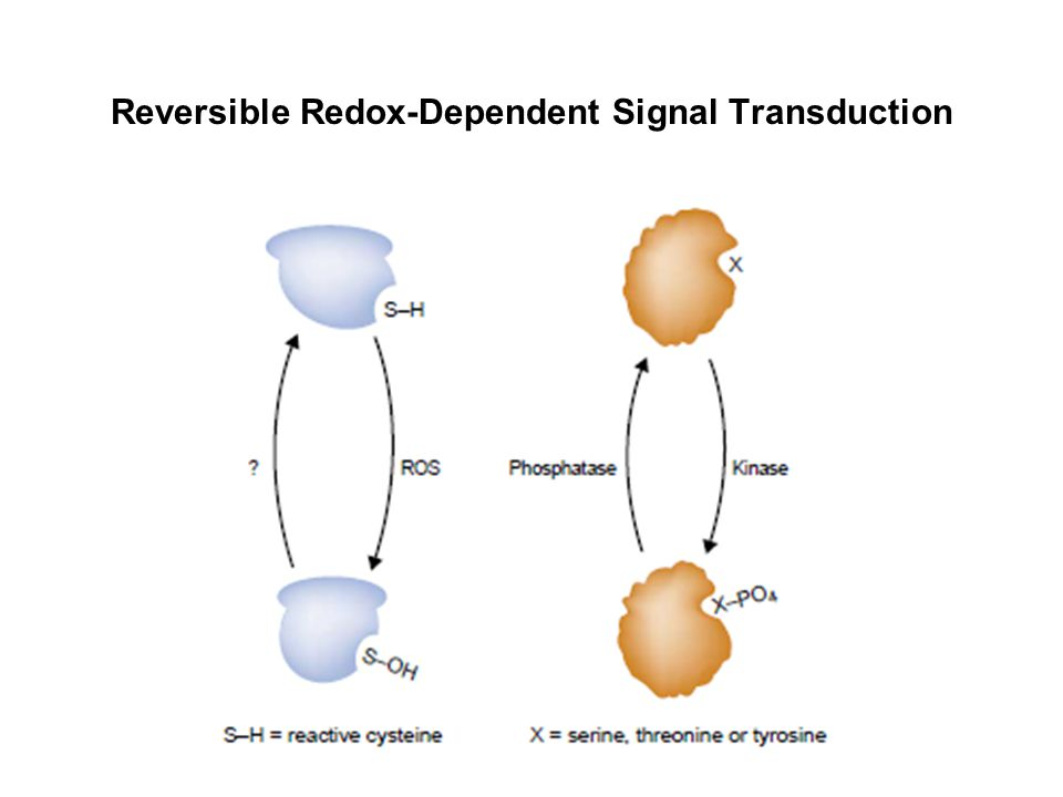 Reversible Redox-Dependent Signal Transduction