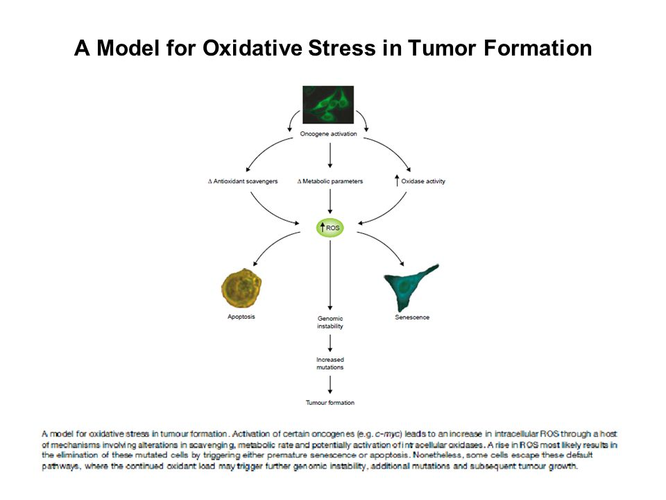 A Model for Oxidative Stress in Tumor Formation