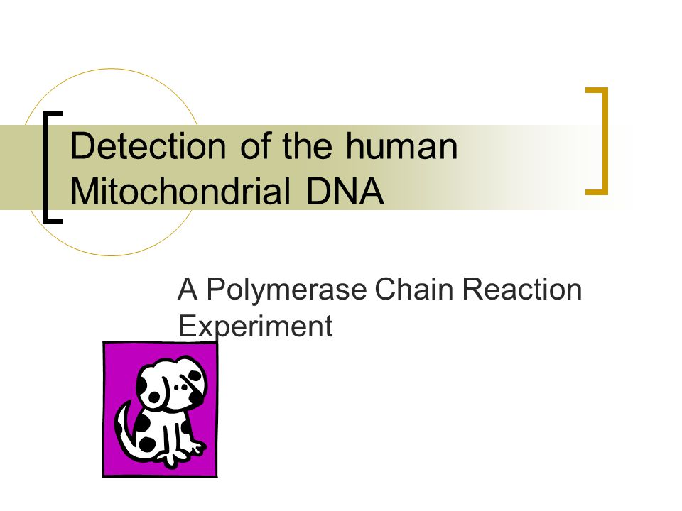 Detection of the human Mitochondrial DNA A Polymerase Chain Reaction Experiment