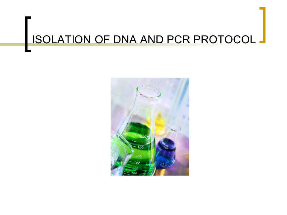 ISOLATION OF DNA AND PCR PROTOCOL