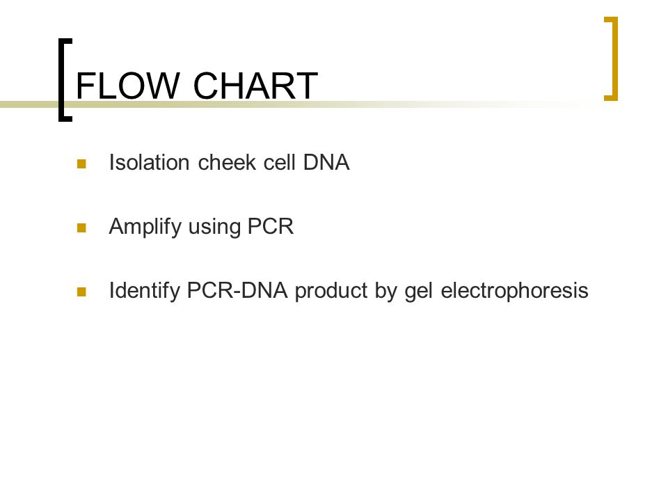 FLOW CHART Isolation cheek cell DNA Amplify using PCR Identify PCR-DNA product by gel electrophoresis