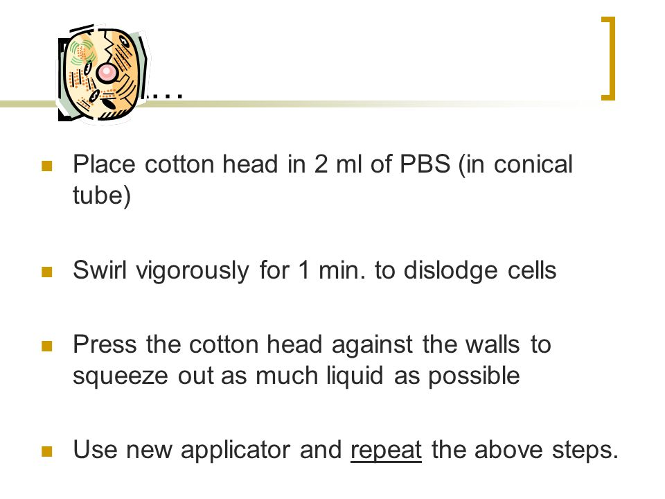 Next… Place cotton head in 2 ml of PBS (in conical tube) Swirl vigorously for 1 min.