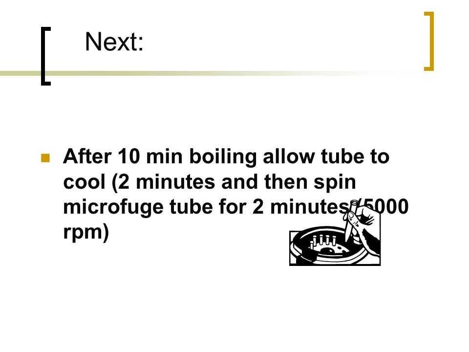 Next: After 10 min boiling allow tube to cool (2 minutes and then spin microfuge tube for 2 minutes (5000 rpm)