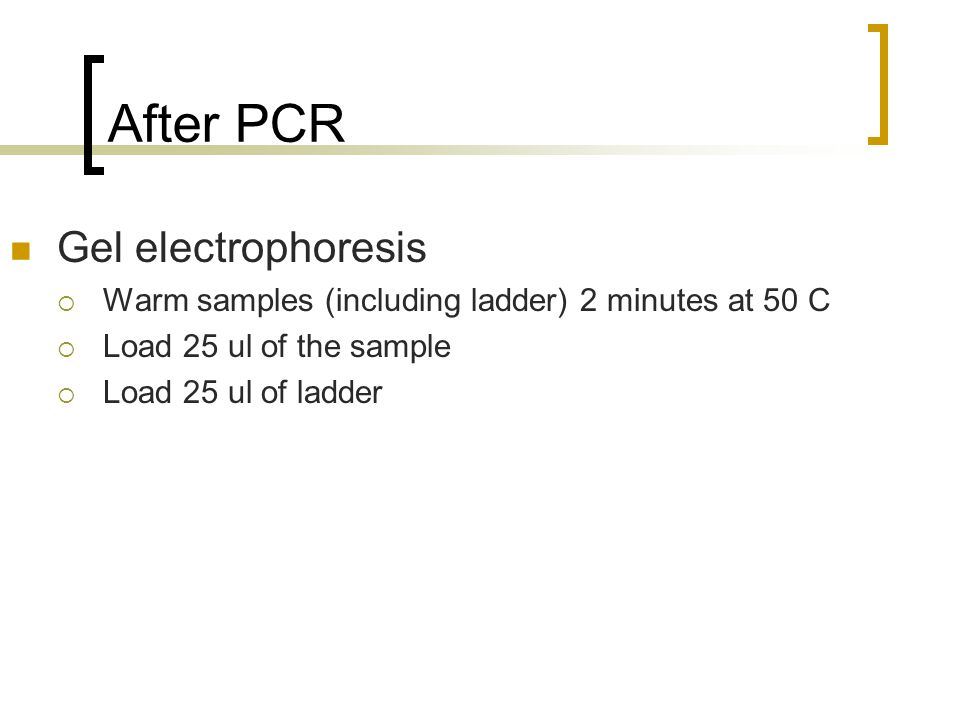 After PCR Gel electrophoresis  Warm samples (including ladder) 2 minutes at 50 C  Load 25 ul of the sample  Load 25 ul of ladder