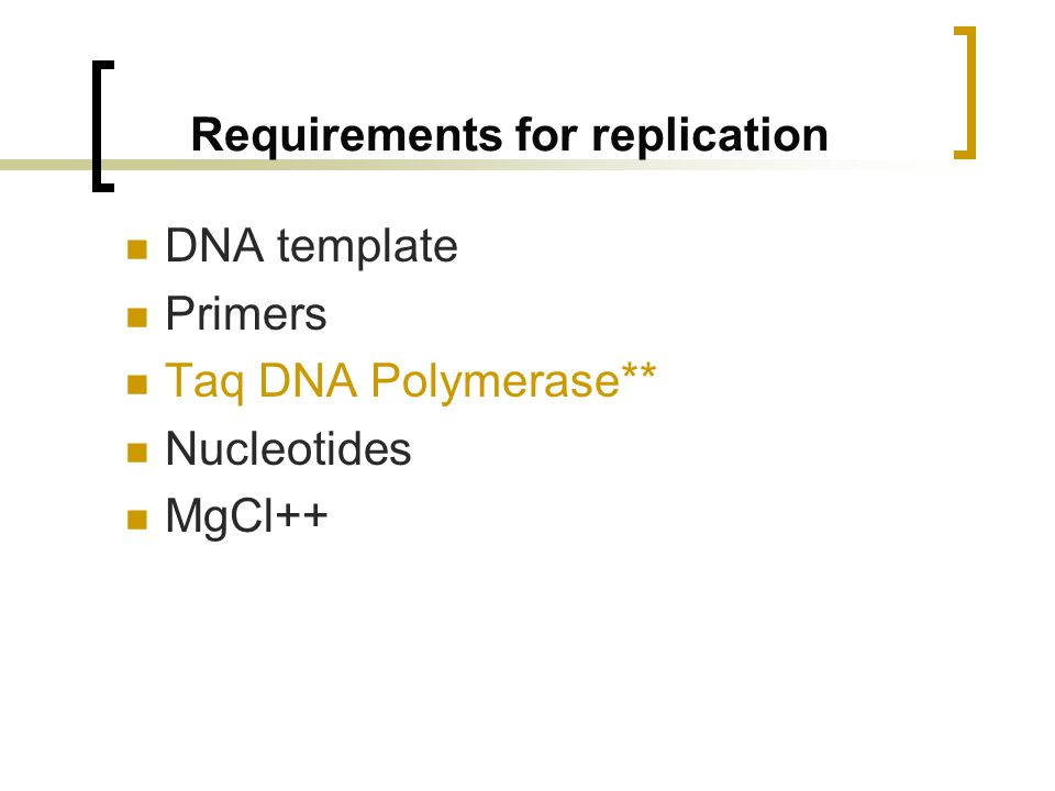 Requirements for replication DNA template Primers Taq DNA Polymerase** Nucleotides MgCl++