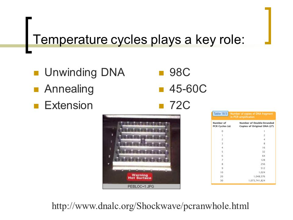 Temperature cycles plays a key role: Unwinding DNA Annealing Extension 98C 45-60C 72C http://www.dnalc.org/Shockwave/pcranwhole.html