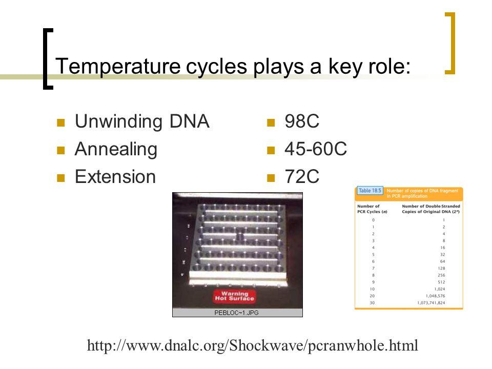 After PCR Gel electrophoresis  Warm samples (including ladder) 2 minutes at 50 C  Load 25 ul of the sample  Load 25 ul of ladder