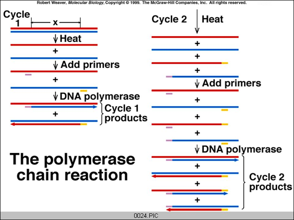 Summary: Unwinding DNA Annealing Extension 98C 45-60C 72C http://www.dnalc.org/Shockwave/pcranwhole.html