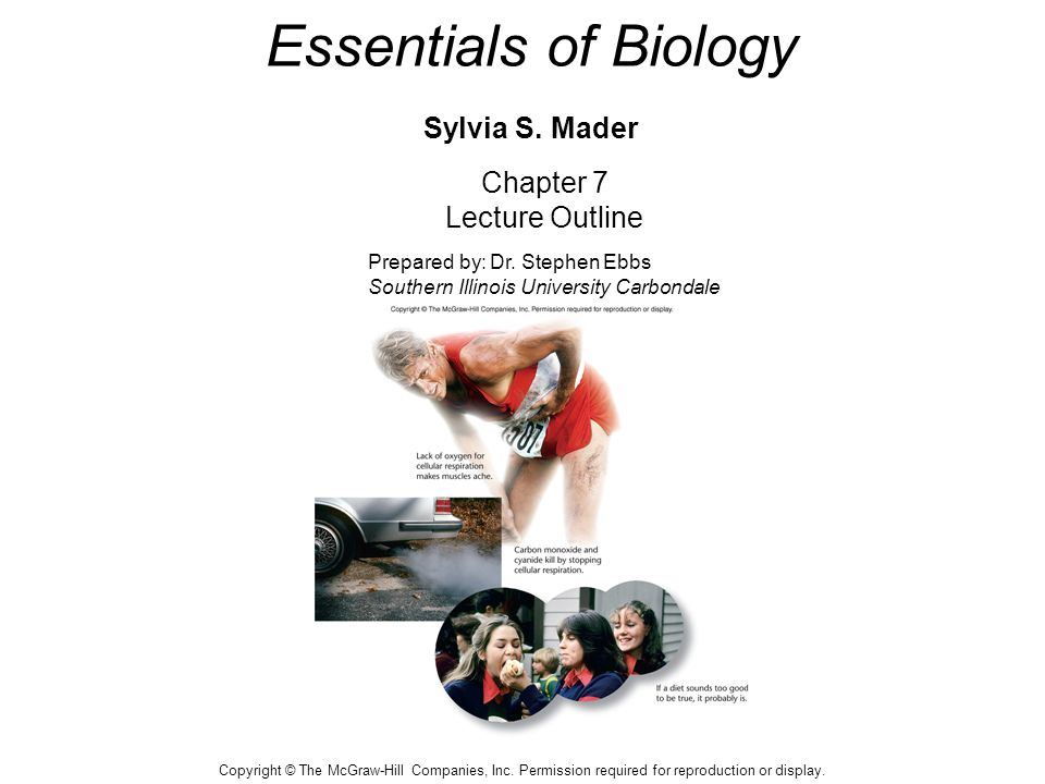 Essentials of Biology Sylvia S.Mader Chapter 7 Lecture Outline Prepared by: Dr.