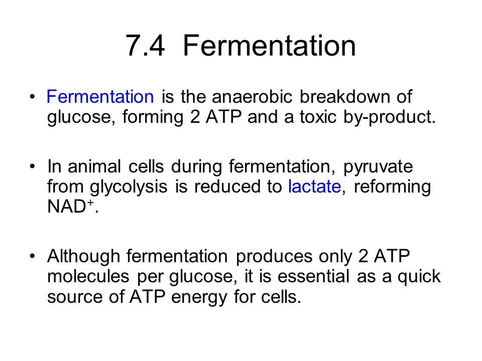 7.4 Fermentation Fermentation is the anaerobic breakdown of glucose, forming 2 ATP and a toxic by-product.