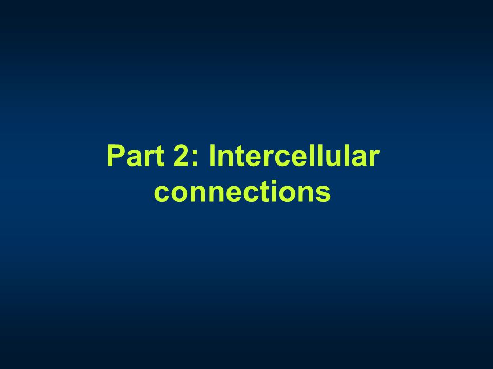 Part 2: Intercellular connections