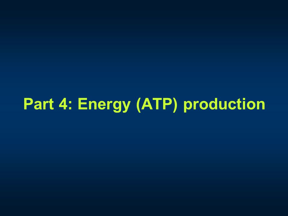 Part 4: Energy (ATP) production