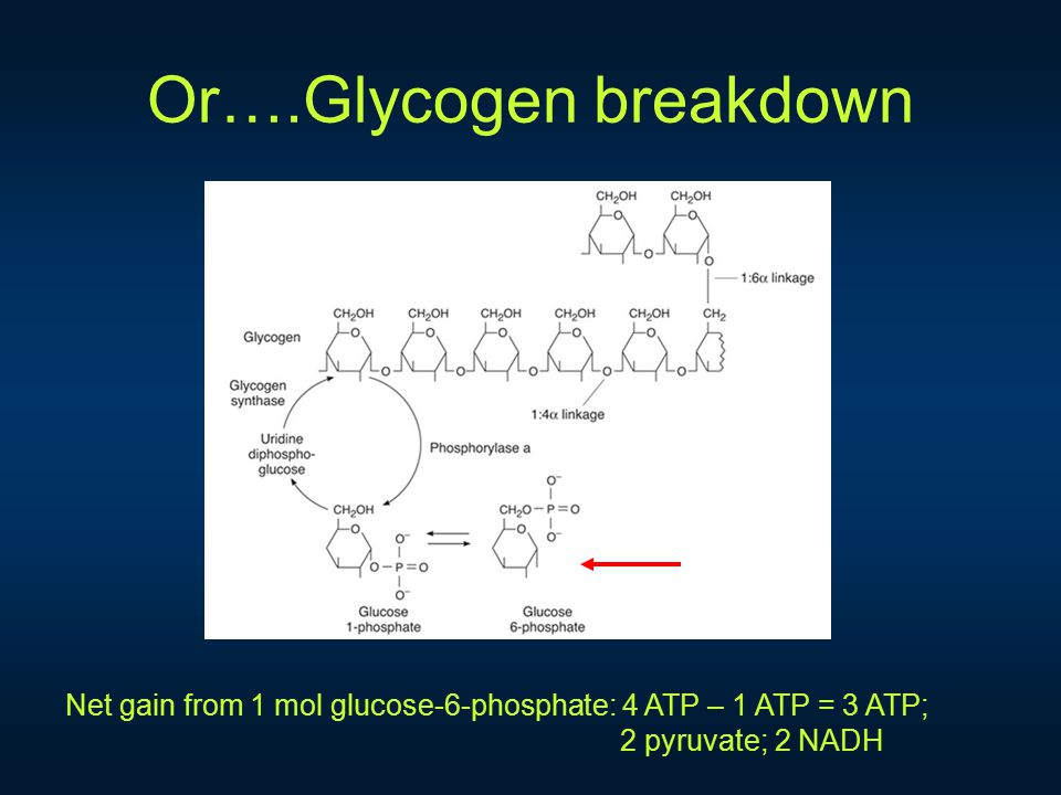 Or….Glycogen breakdown Net gain from 1 mol glucose-6-phosphate: 4 ATP – 1 ATP = 3 ATP; 2 pyruvate; 2 NADH