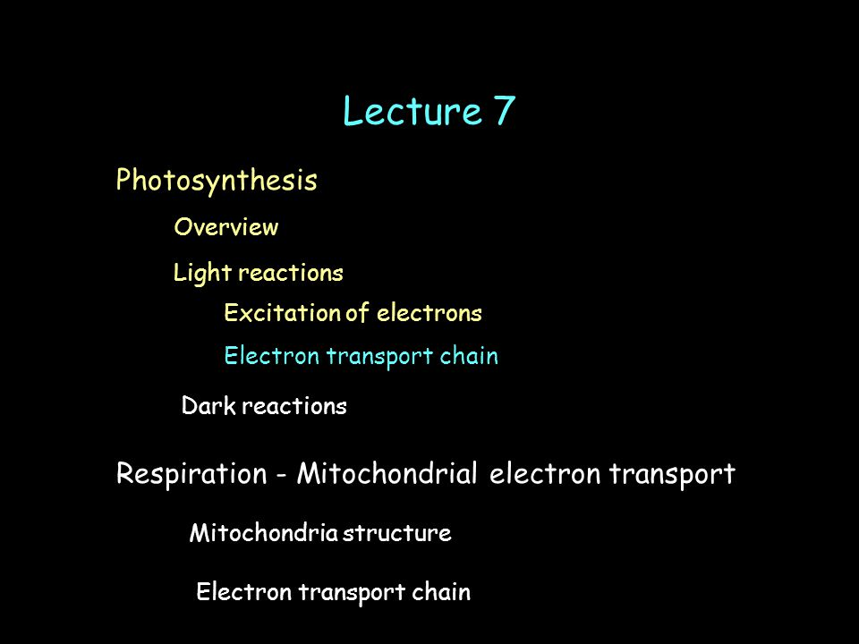 Lecture 7 Light reactions Electron transport chain Dark reactions Overview Photosynthesis Excitation of electrons Respiration - Mitochondrial electron transport Mitochondria structure Electron transport chain