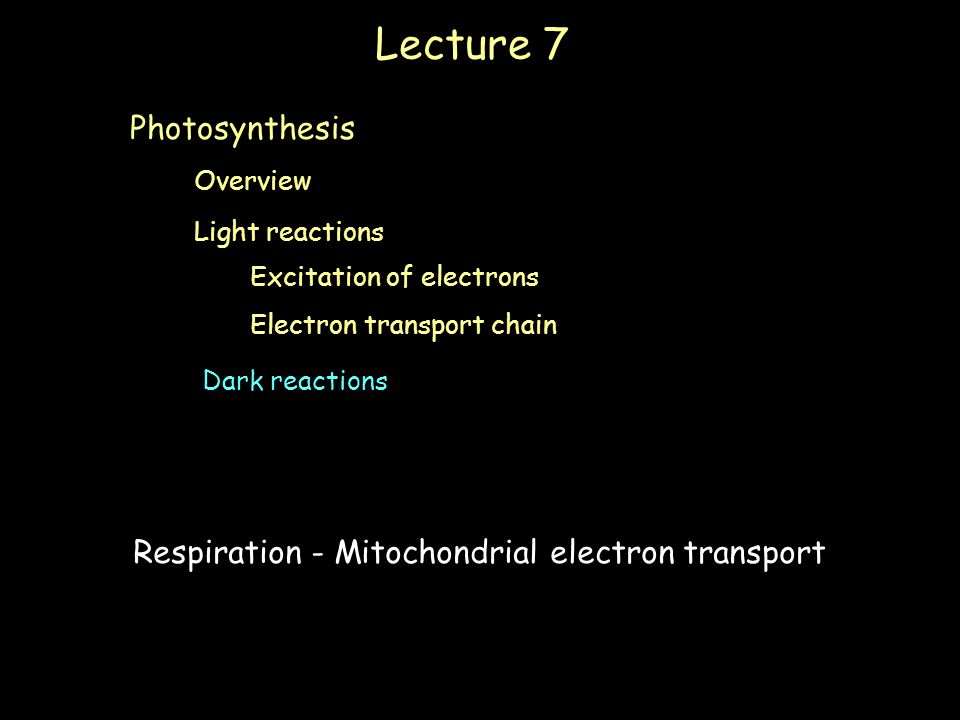 Lecture 7 Light reactions Electron transport chain Dark reactions Overview Photosynthesis Excitation of electrons Respiration - Mitochondrial electron