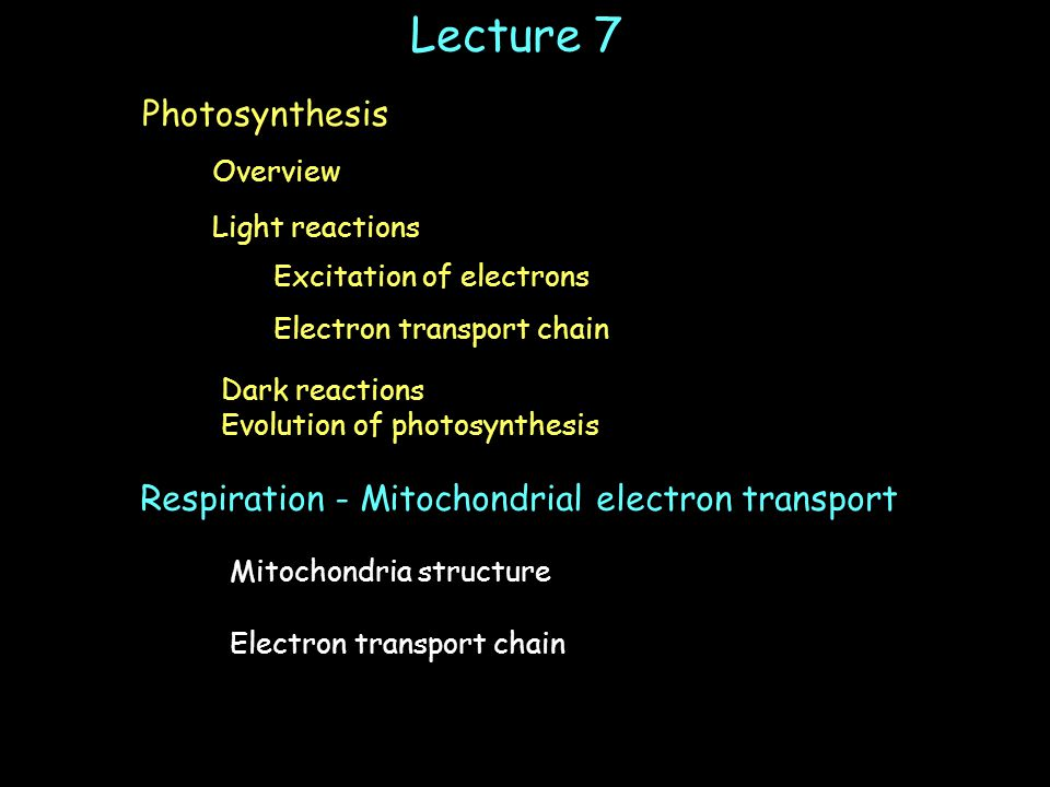 Lecture 7 Light reactions Electron transport chain Dark reactions Evolution of photosynthesis Overview Photosynthesis Excitation of electrons Respiration - Mitochondrial electron transport Mitochondria structure Electron transport chain