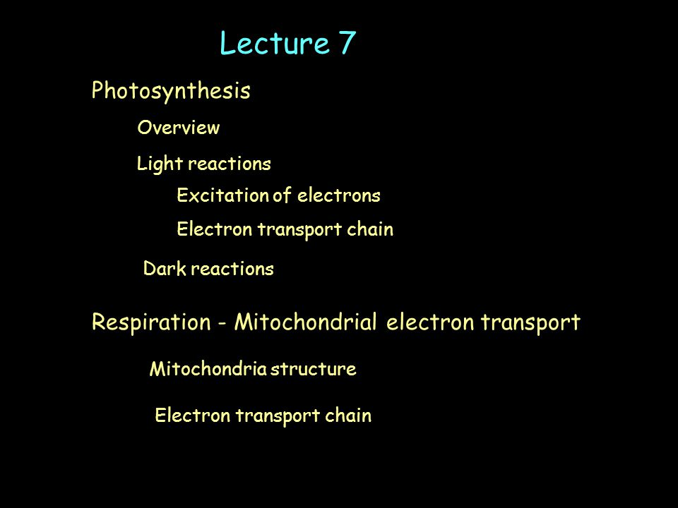 Light reactions Electron transport chain Dark reactions Overview Lecture 7 Photosynthesis Excitation of electrons Respiration - Mitochondrial electron transport Mitochondria structure Electron transport chain
