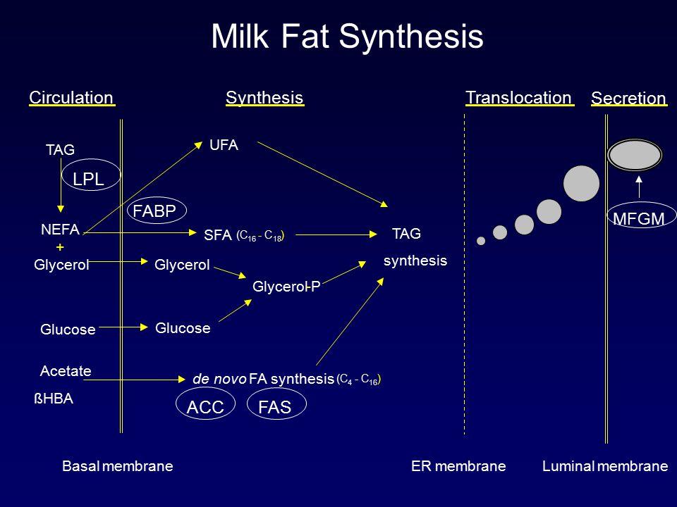 Basal membraneERmembraneLuminalmembrane LPL FAS ACC de novo FA synthesis (C 4 -C 16 ) TAG synthesis Glucose SFA (C 16 -C 18 ) SynthesisSecretion Acetate ßHBA TAG Glucose CirculationTranslocation UFA FABP NEFA + Glycerol MFGM Glycerol -P Milk Fat Synthesis