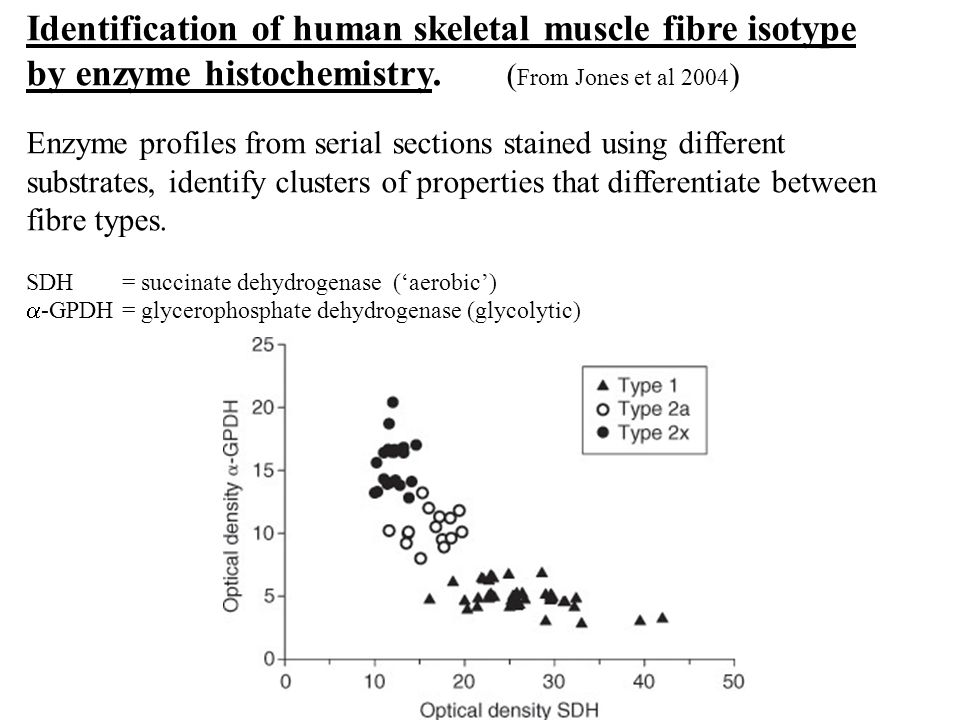 Identification of human skeletal muscle fibre isotype by enzyme histochemistry. ( From Jones et al 2004 ) Enzyme profiles from serial sections stained