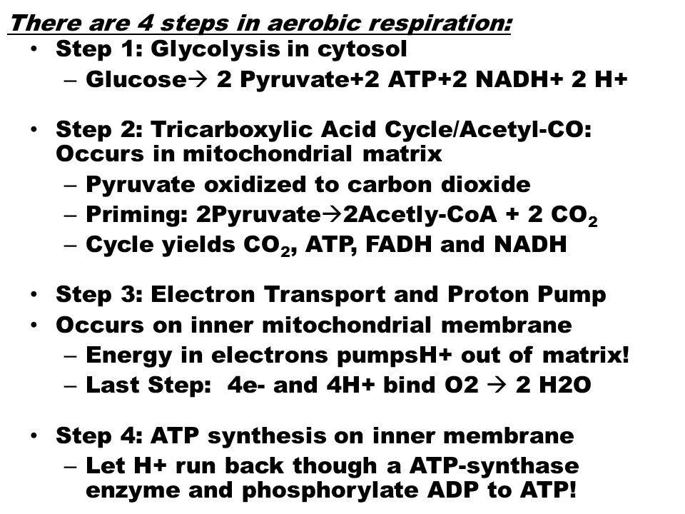 There are 4 steps in aerobic respiration: Step 1: Glycolysis in cytosol – Glucose  2 Pyruvate+2 ATP+2 NADH+ 2 H+ Step 2: Tricarboxylic Acid Cycle/Ace