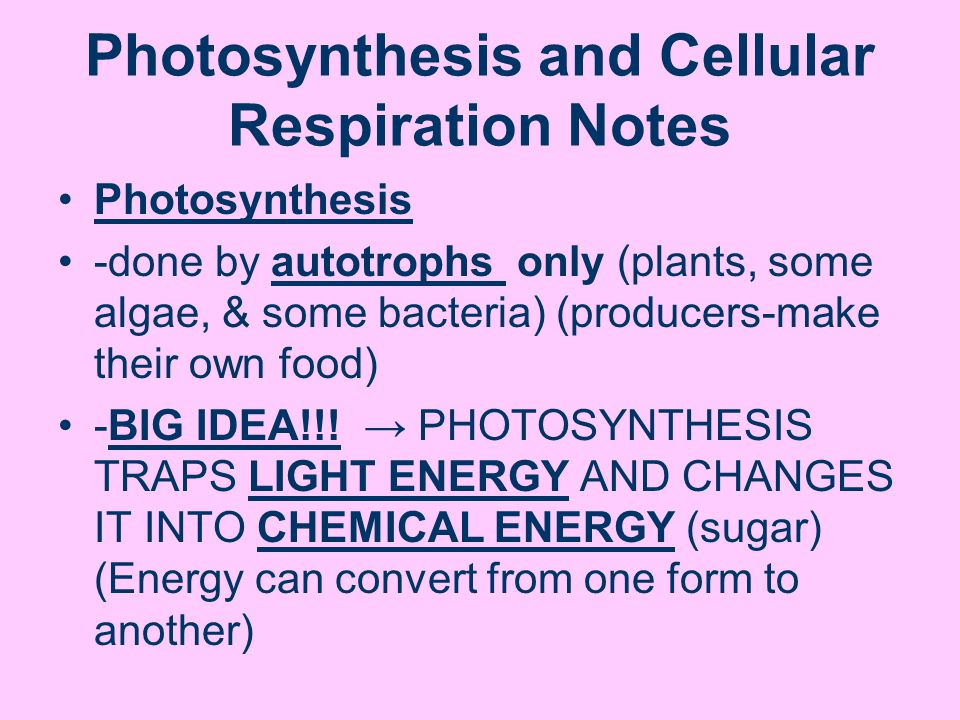 Photosynthesis and Cellular Respiration Notes Photosynthesis -done by autotrophs only (plants, some algae, & some bacteria) (producers-make their own food) -BIG IDEA!!.