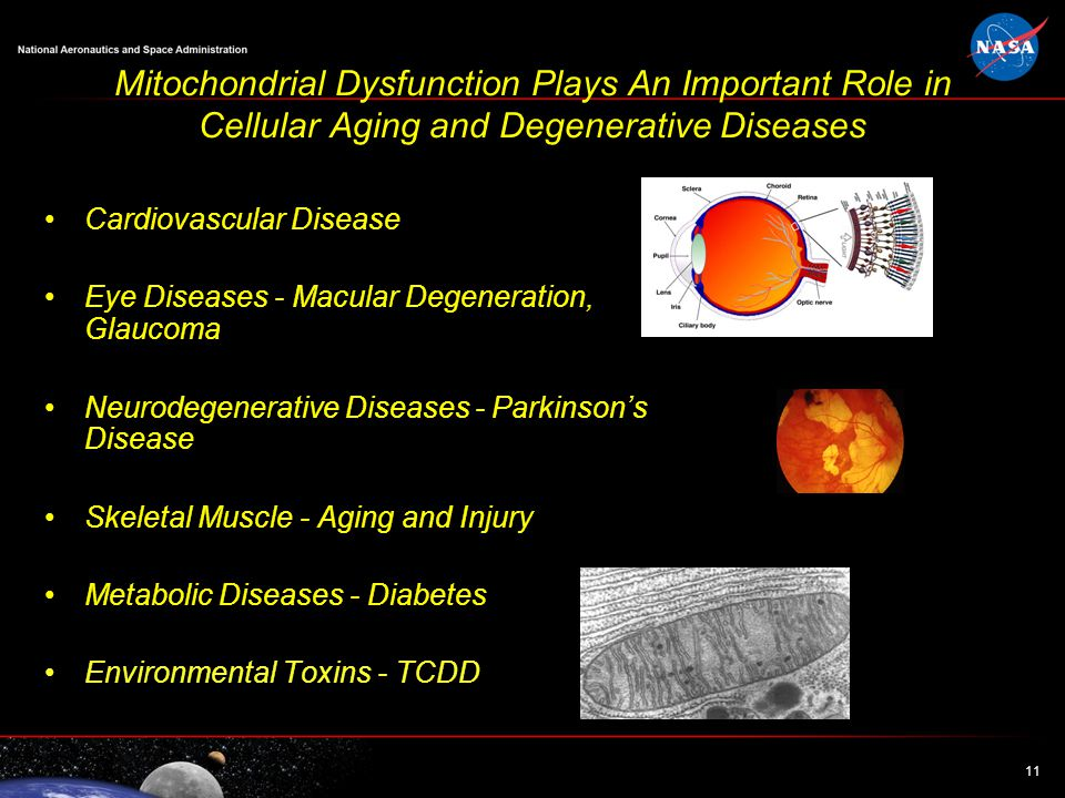 11 Mitochondrial Dysfunction Plays An Important Role in Cellular Aging and Degenerative Diseases Cardiovascular Disease Eye Diseases - Macular Degeneration, Glaucoma Neurodegenerative Diseases - Parkinson's Disease Skeletal Muscle - Aging and Injury Metabolic Diseases - Diabetes Environmental Toxins - TCDD