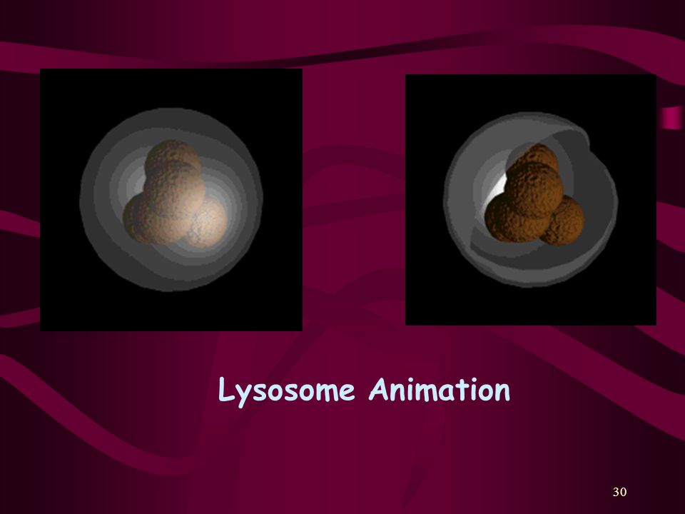 30 Lysosome Animation