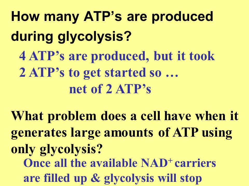 How many ATP's are produced during glycolysis? 4 ATP's are produced, but it took 2 ATP's to get started so … net of 2 ATP's What problem does a cell h