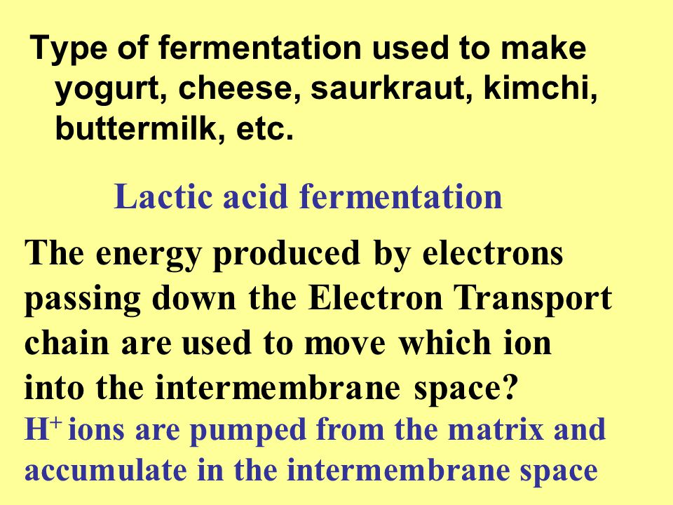 Type of fermentation used to make yogurt, cheese, saurkraut, kimchi, buttermilk, etc. Lactic acid fermentation The energy produced by electrons passin