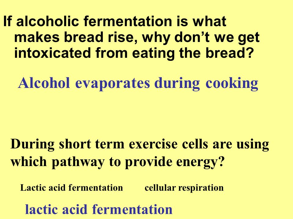 If alcoholic fermentation is what makes bread rise, why don't we get intoxicated from eating the bread? Alcohol evaporates during cooking During short