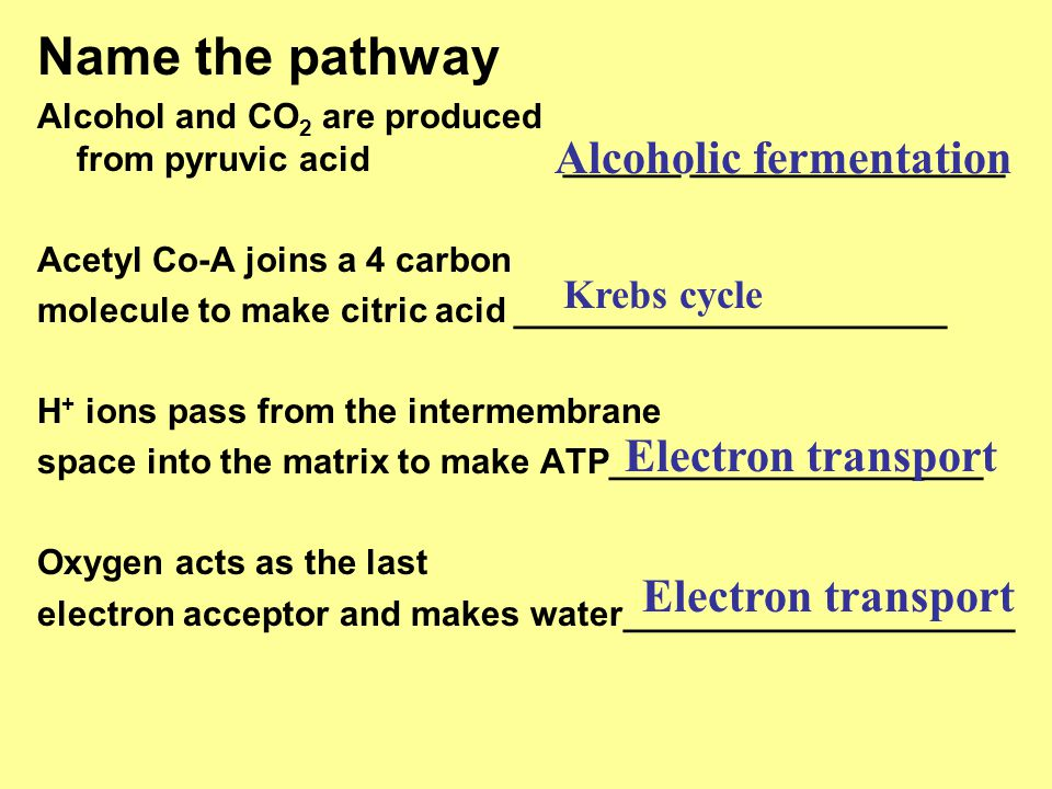 Name the pathway Alcohol and CO 2 are produced from pyruvic acid______ ________________ Acetyl Co-A joins a 4 carbon molecule to make citric acid ____